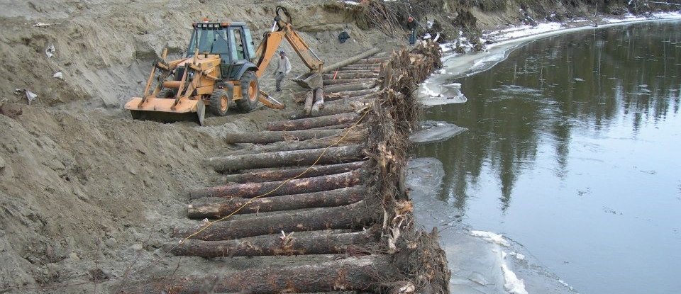 riparian ehancement with spruce tree root wads.jpg