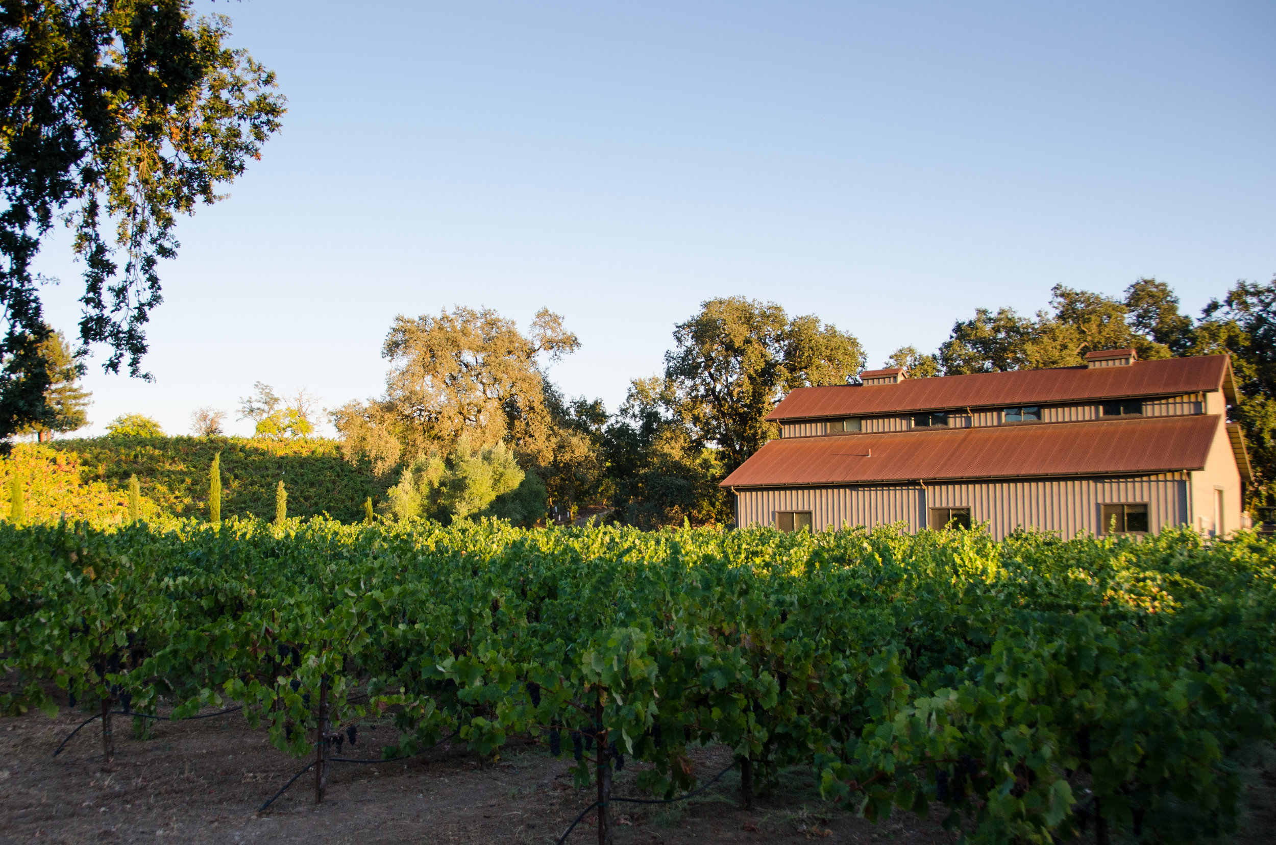 Street view of Due Ruscelli Winery