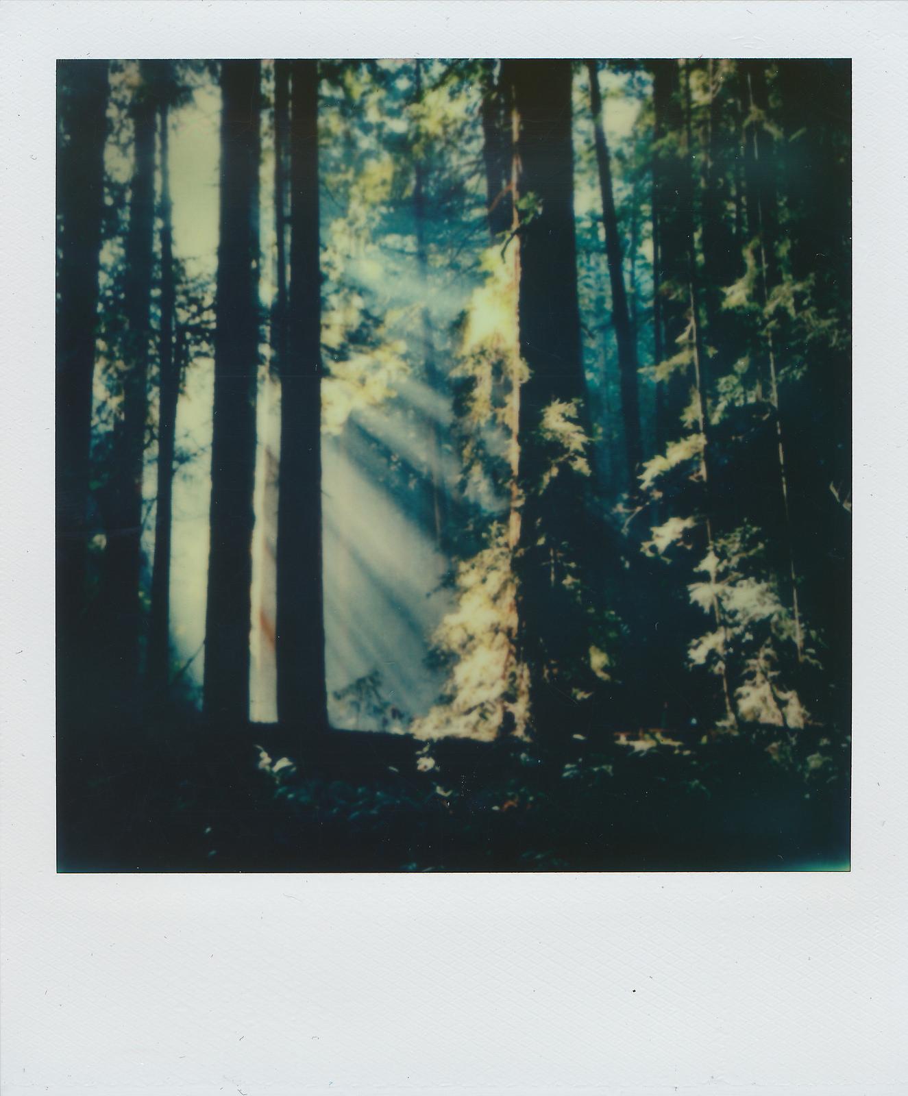 """Muir Woods"" by  Nicholas Misciagna"