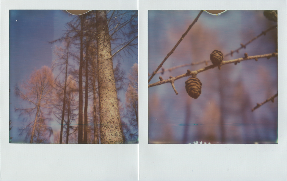 07_untitled_diptych_trees_1.jpg