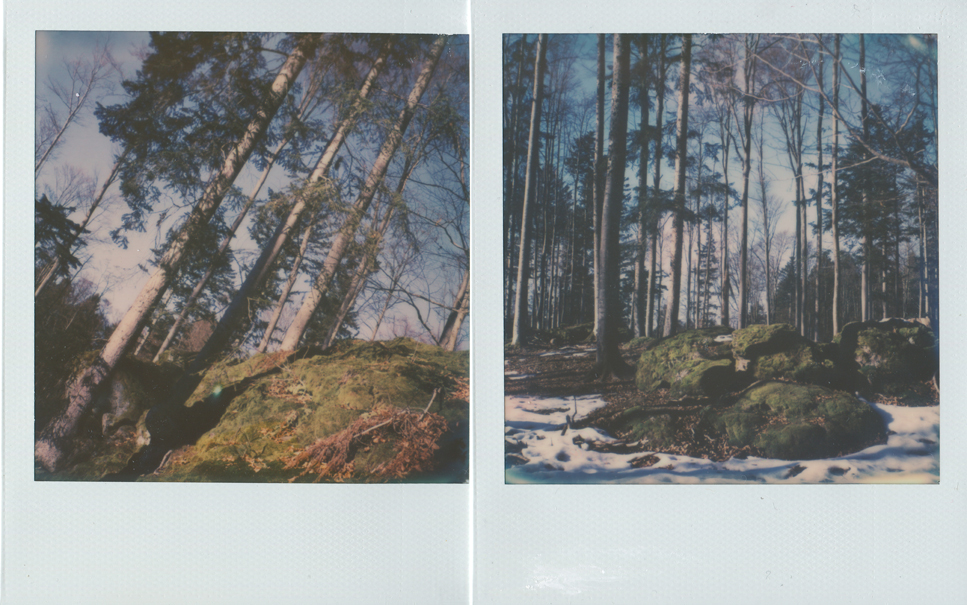 05_untitled_diptych_trees_2.jpg