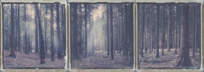 """""""I am a forest..."""" by  ina echternach"""