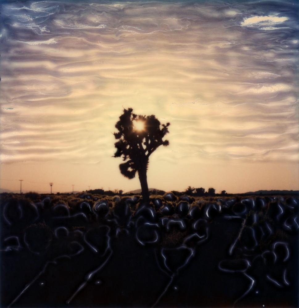 """""""Joshua Tree Sun"""""""