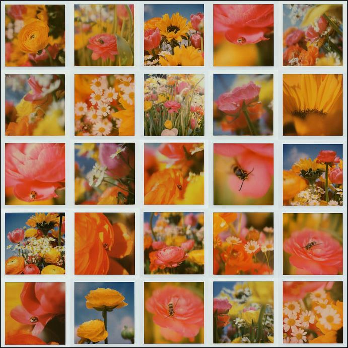 """Botanical Garden"" byJoep Gottemaker"
