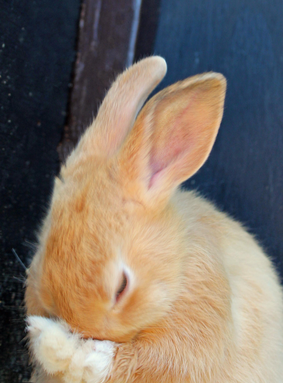 brown bunny.jpg