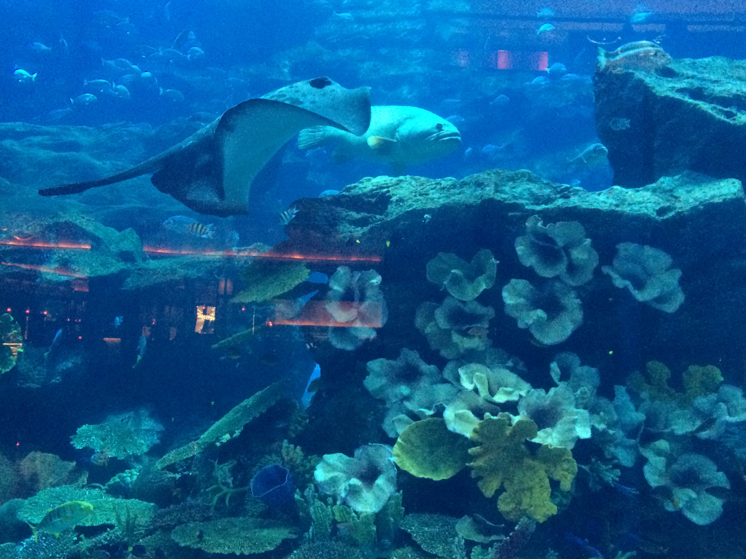 Got sidetracked from Dinner by the Aquarium at the Dubai Mall