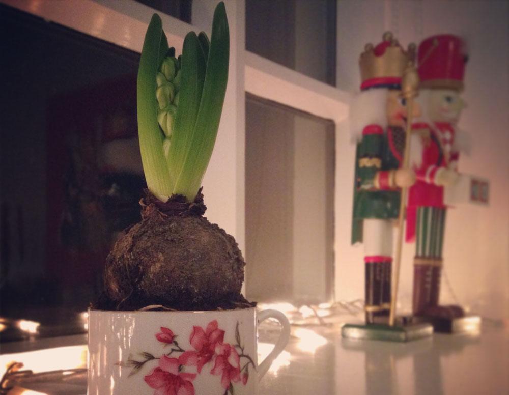 christmasflower_bjorg.jpg