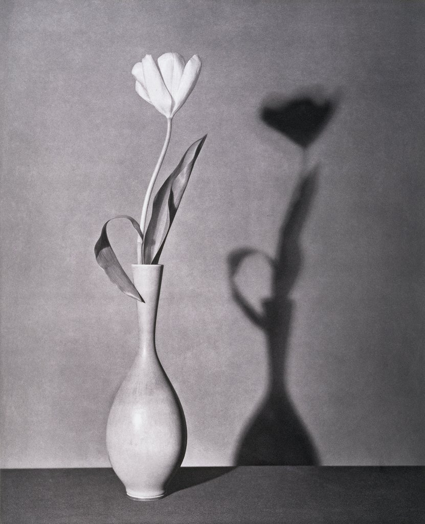 robert-mapplethorpe-tulip-photography