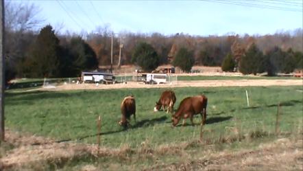 fall pasture 1.png