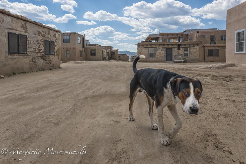 Acoma Dog-2.jpg