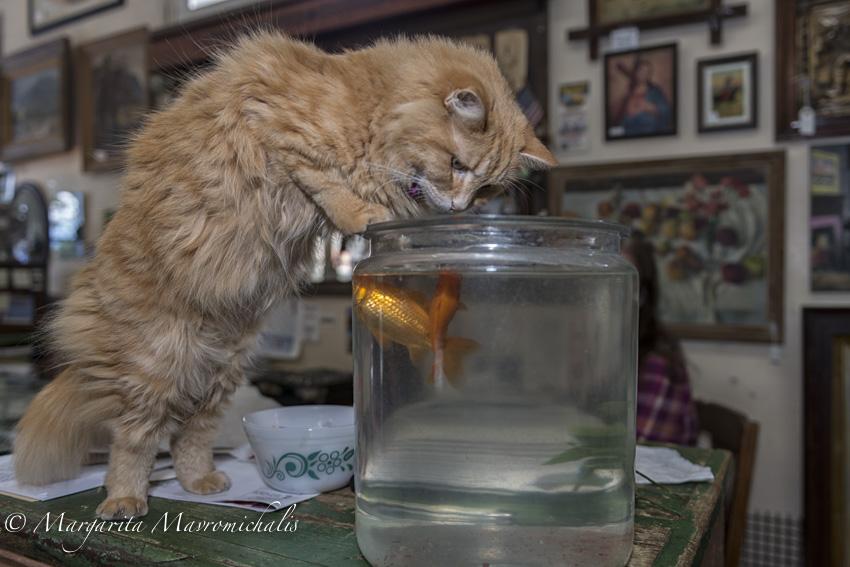 Cat and Fish-2.jpg
