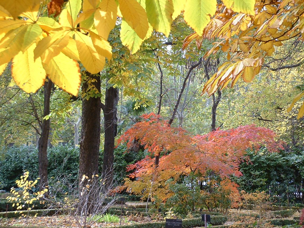 El otoño, una estación perfecta para disfrutar por los colores, la lluvia, los cambios... ¡pero no para nuestro cabello!