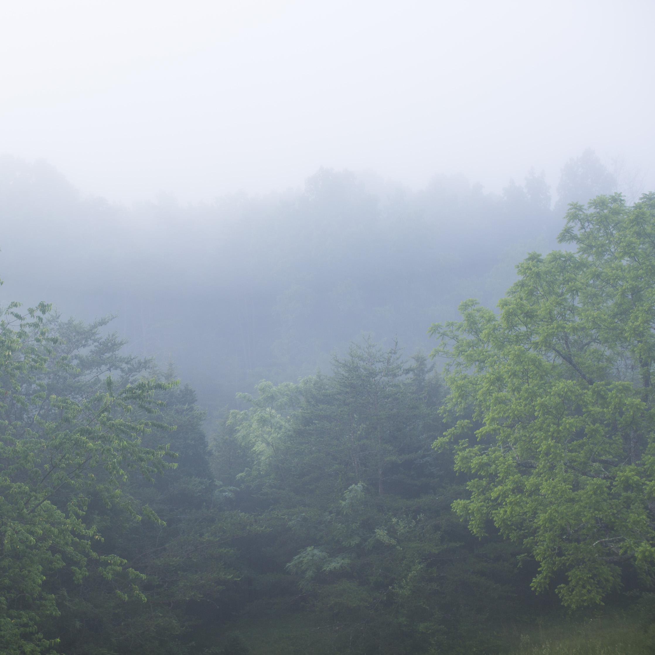 Summer_VA_0028.jpg