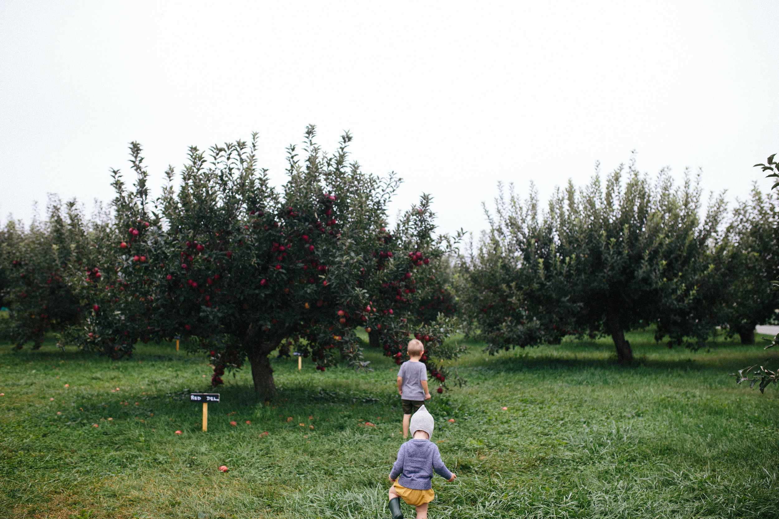 Apple Picking 16'-7.jpg