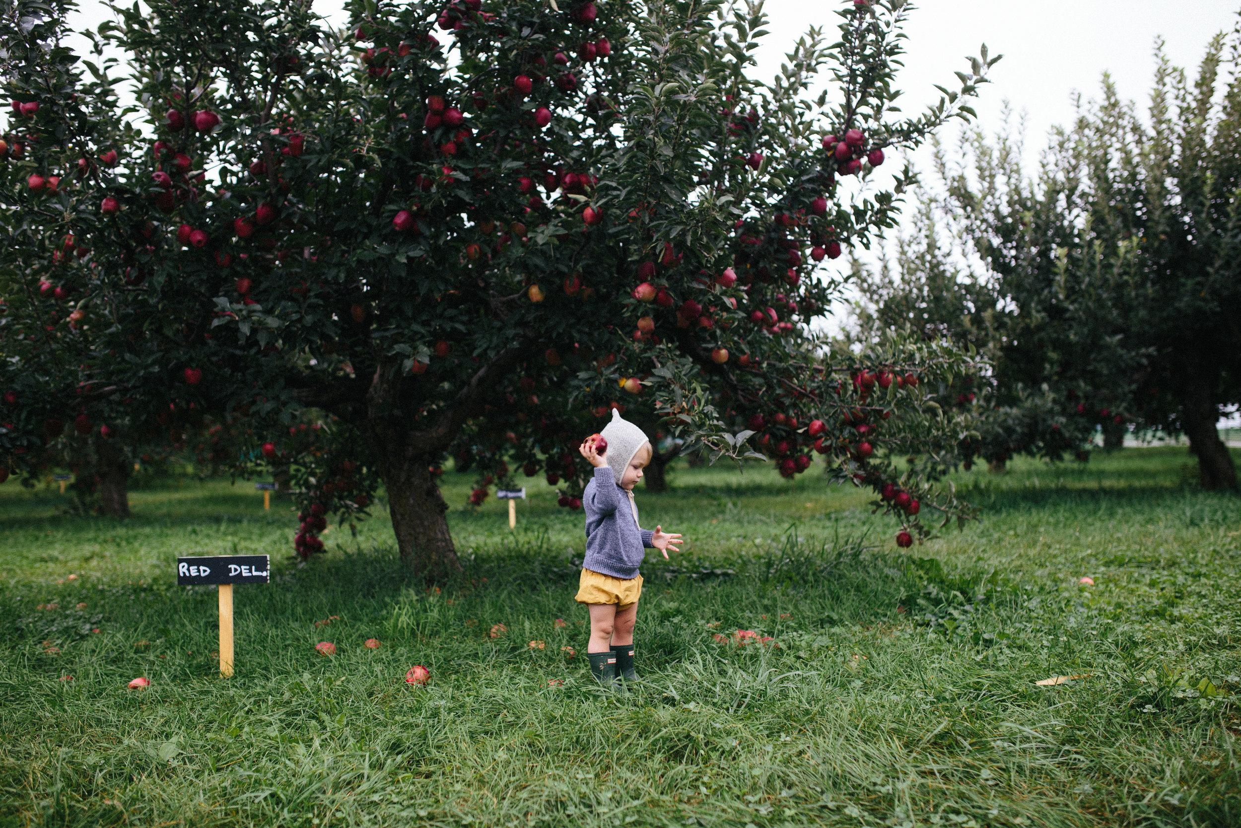 Apple Picking 16'-14.jpg
