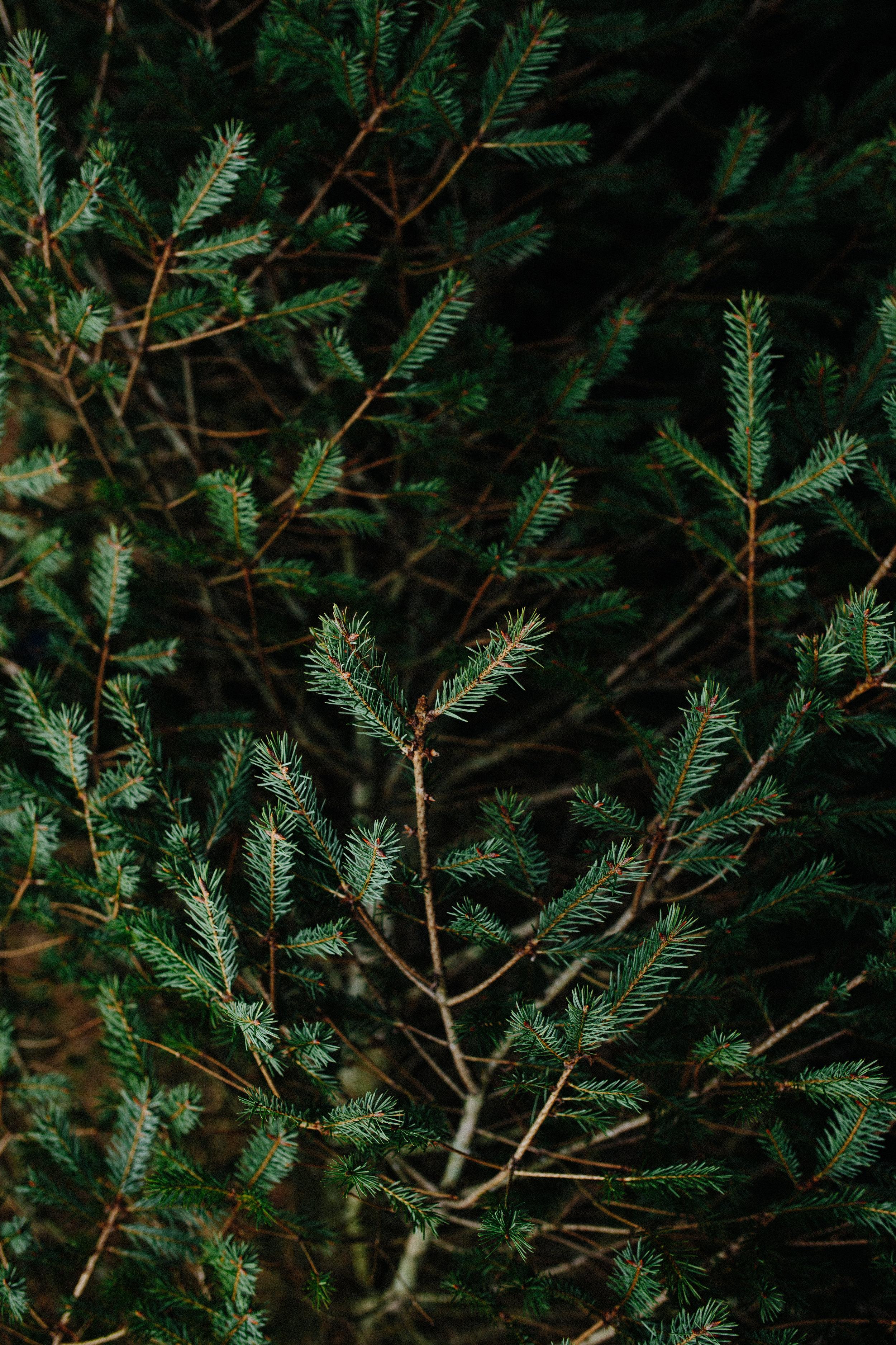 xmas tree-22.jpg
