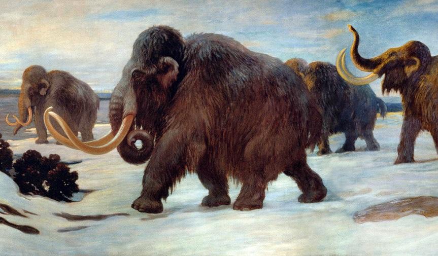 Wollhaar-Mammuts