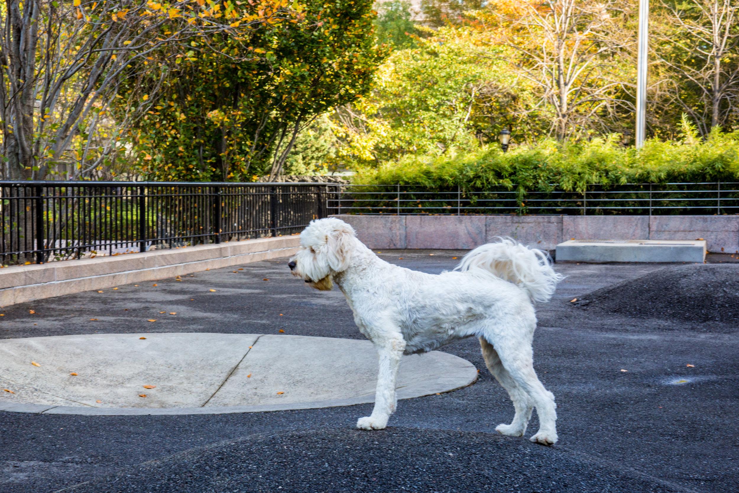 LSNY_Battery-Park-17.jpg