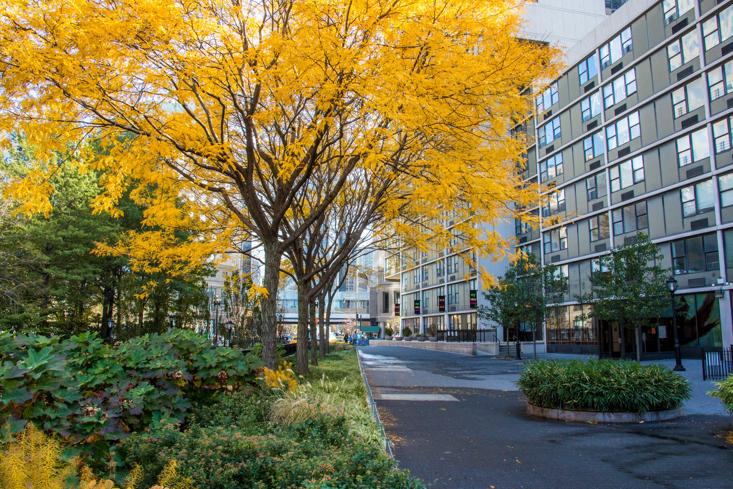 LSNY_Battery-Park-19.jpg