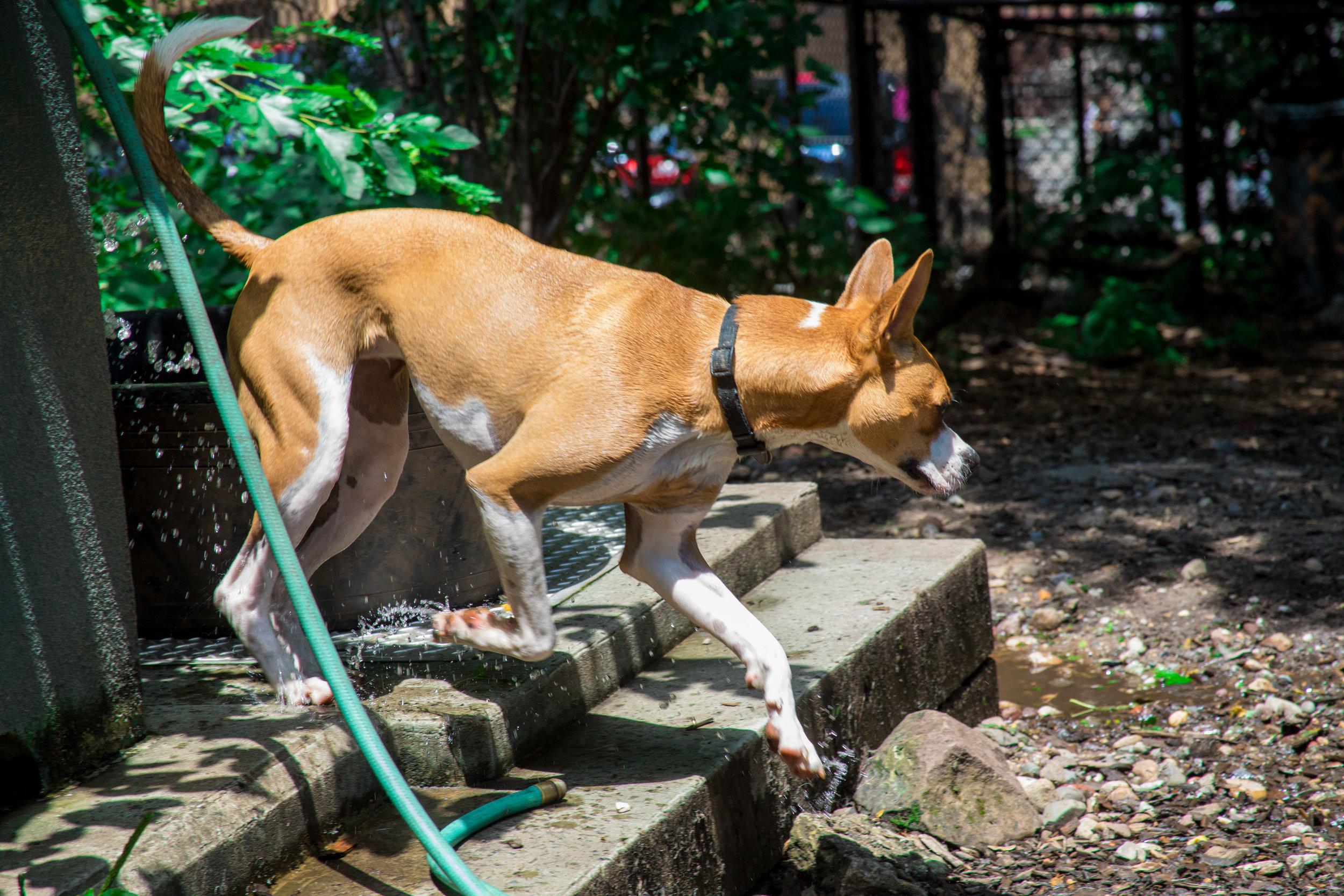 LSNY_Dog_Park-4.jpg