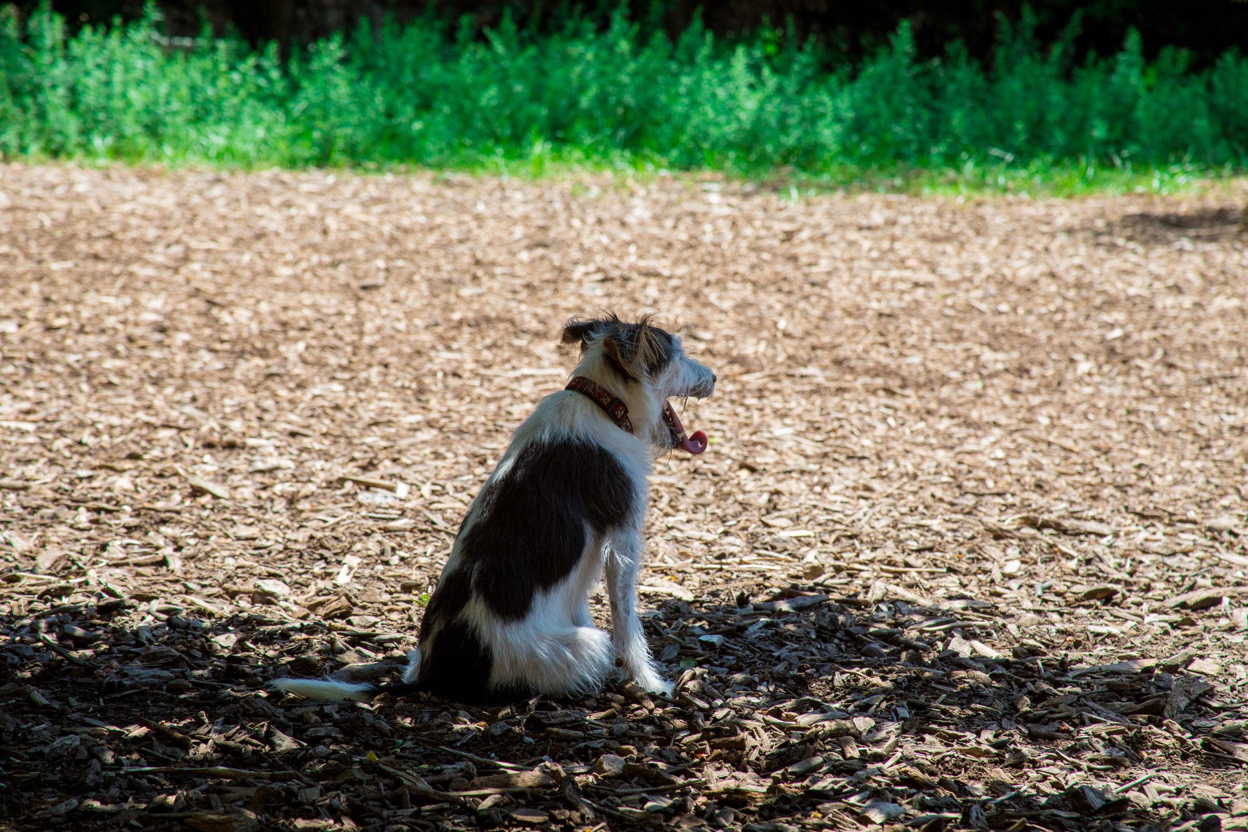 LSNY_Dog_Park-8.jpg