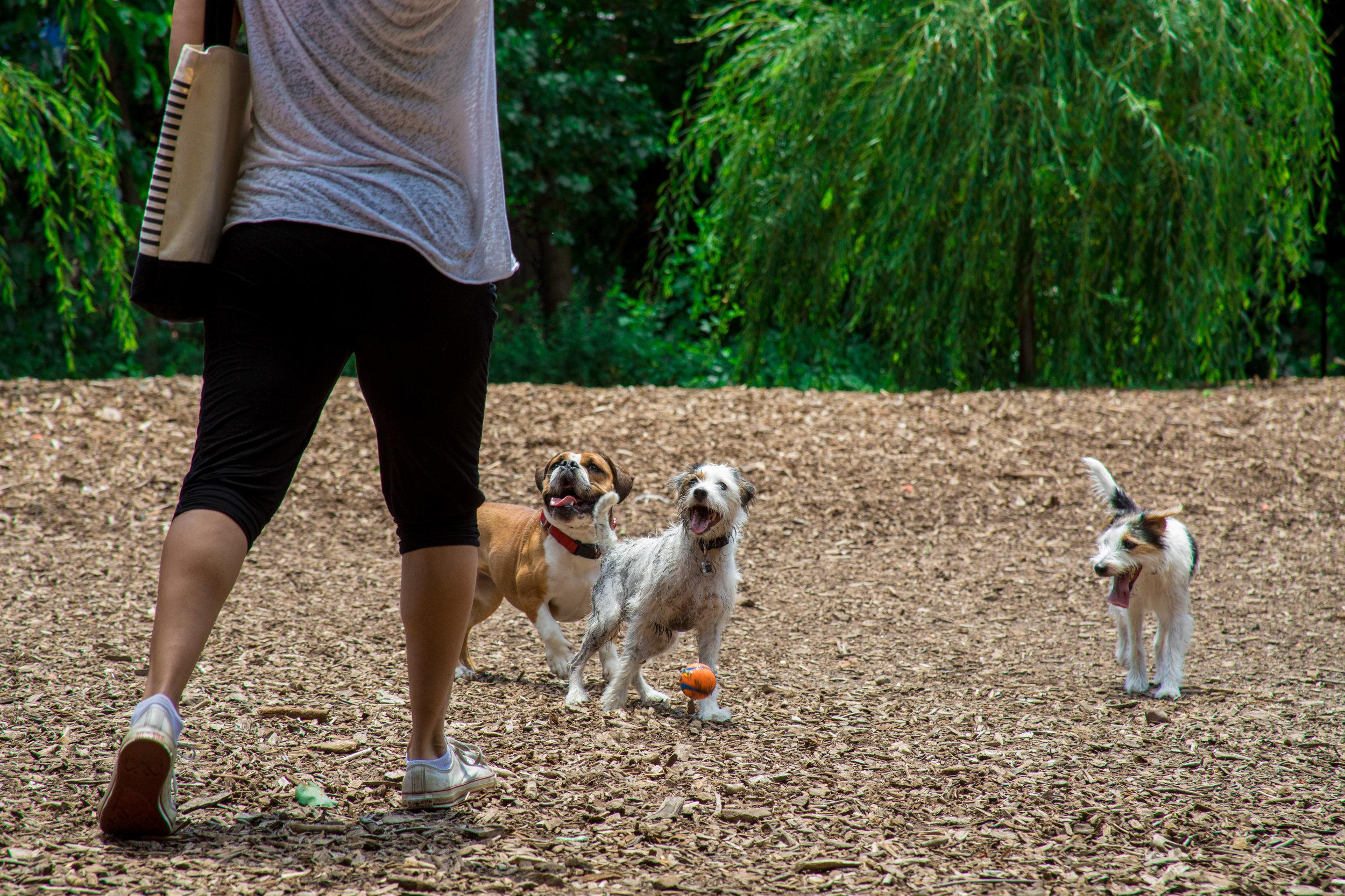 LSNY_Dog_Park-10.jpg