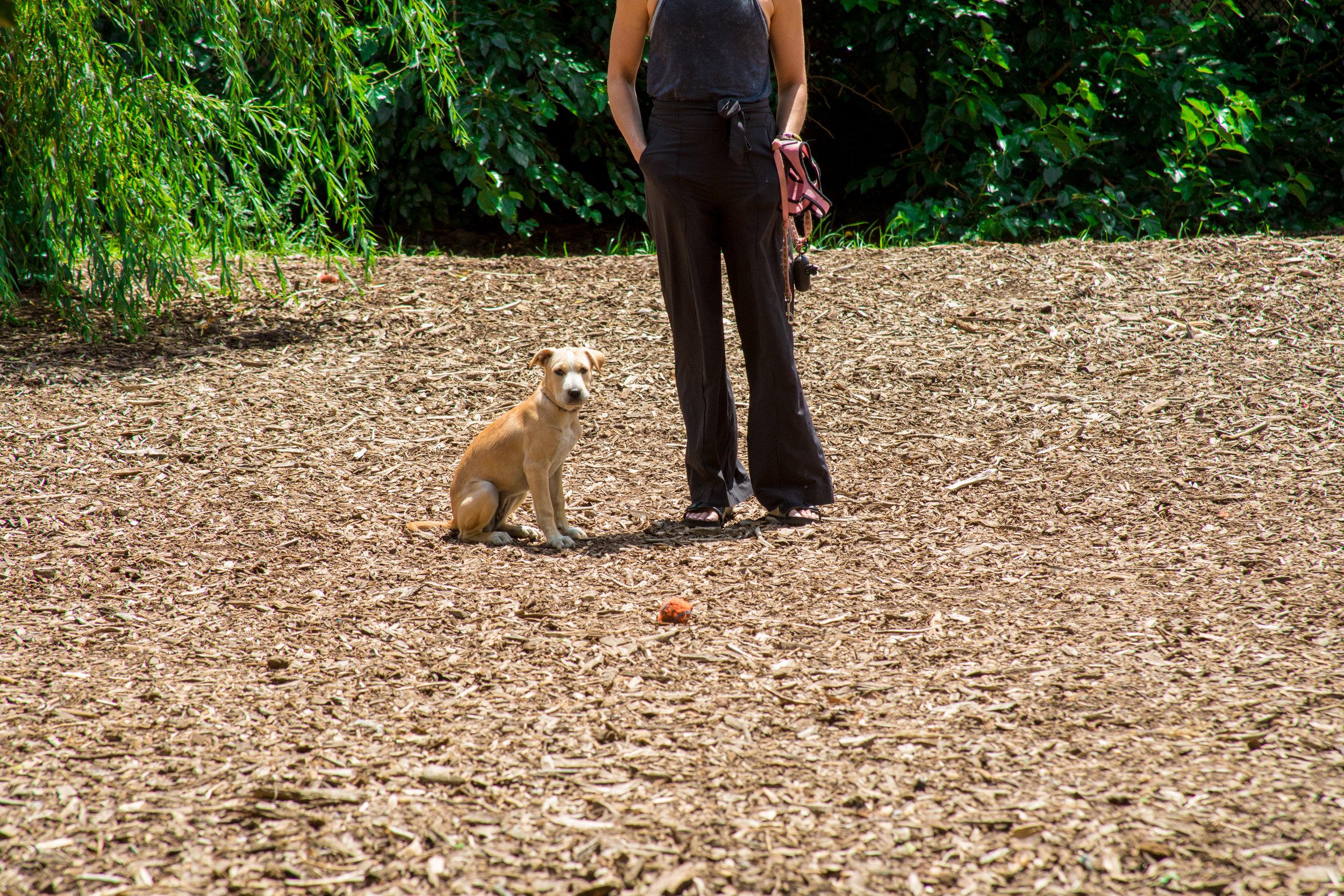 LSNY_Dog_Park-14.jpg