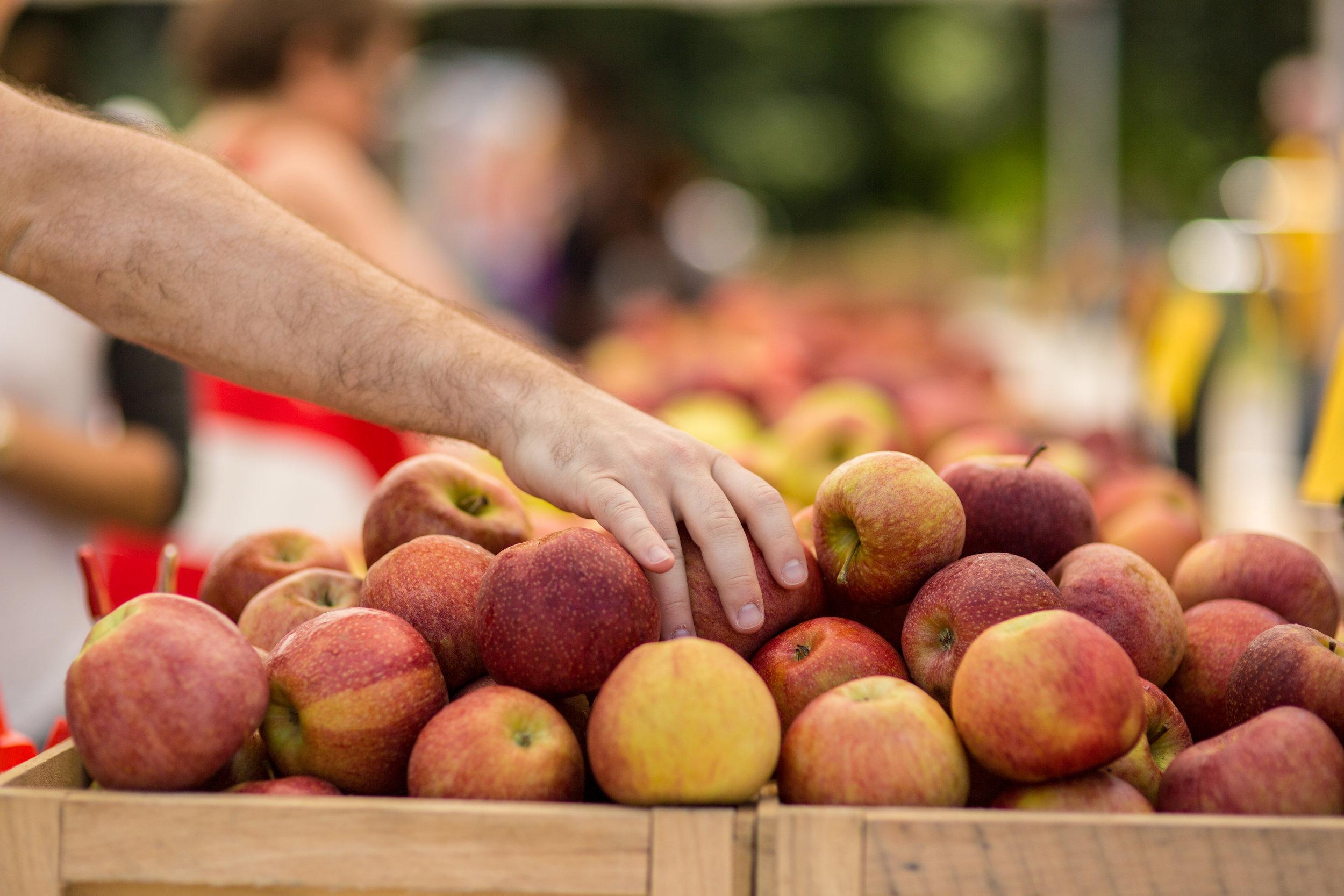 LSNY_Farmers_Market-2.jpg