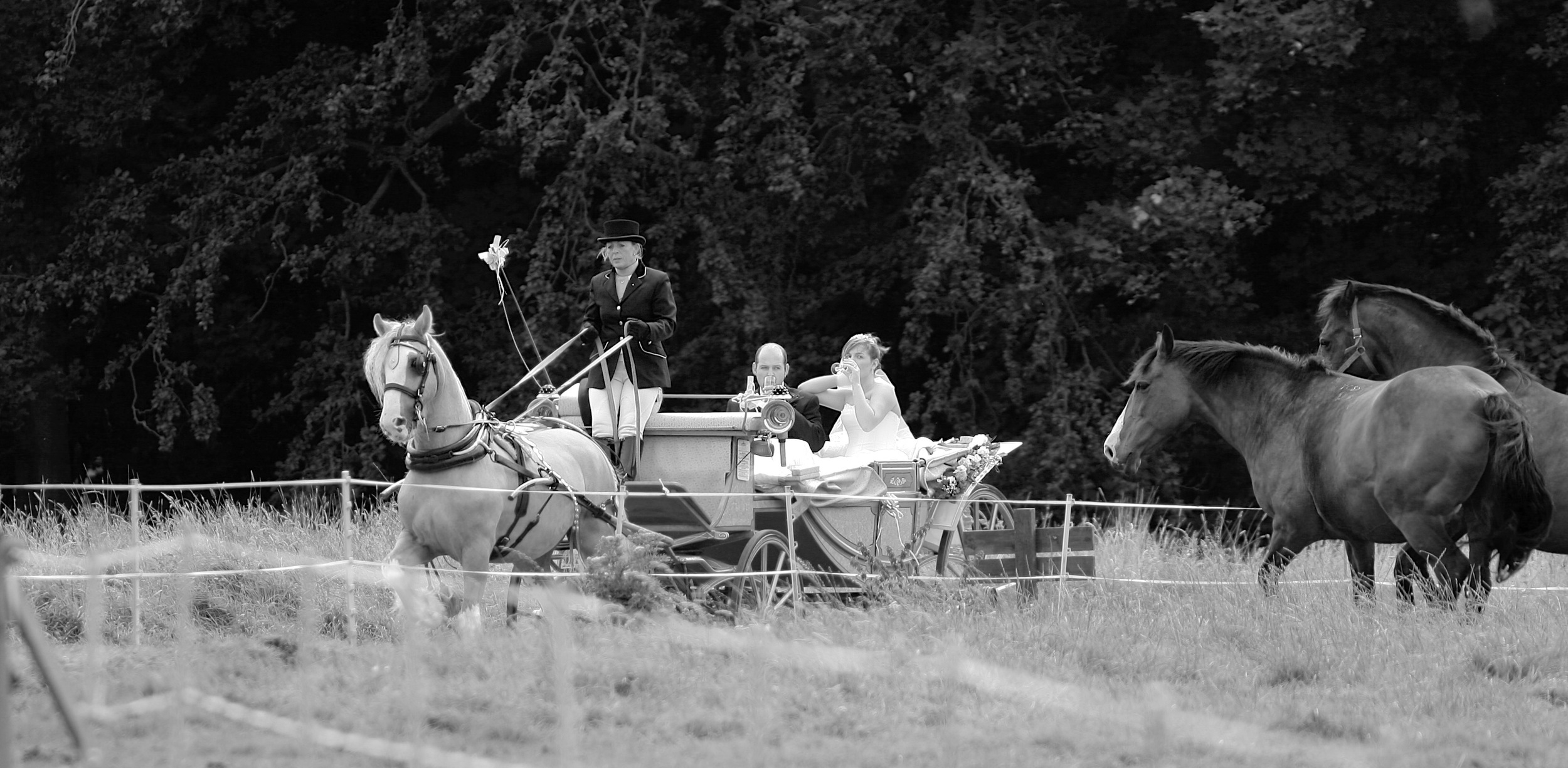 Arriving by Horse & Carriage. ©  Wedding Photography by Vivid Confetti