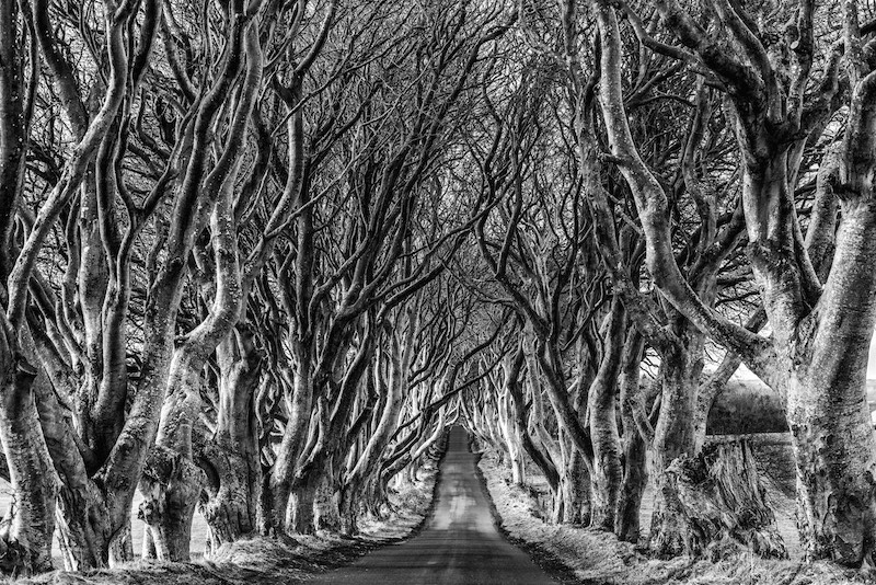 The Dark Hedges.jpg
