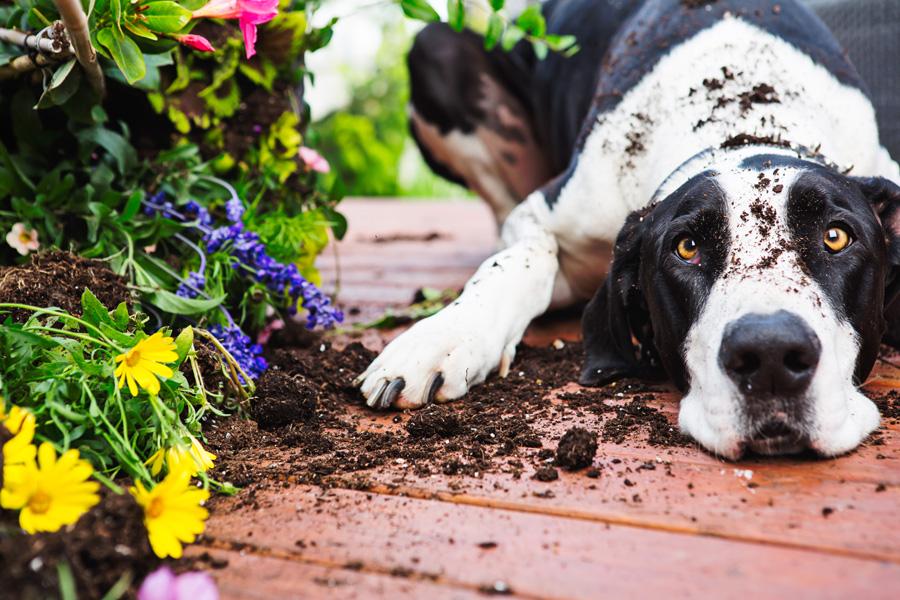 garden dog.jpg