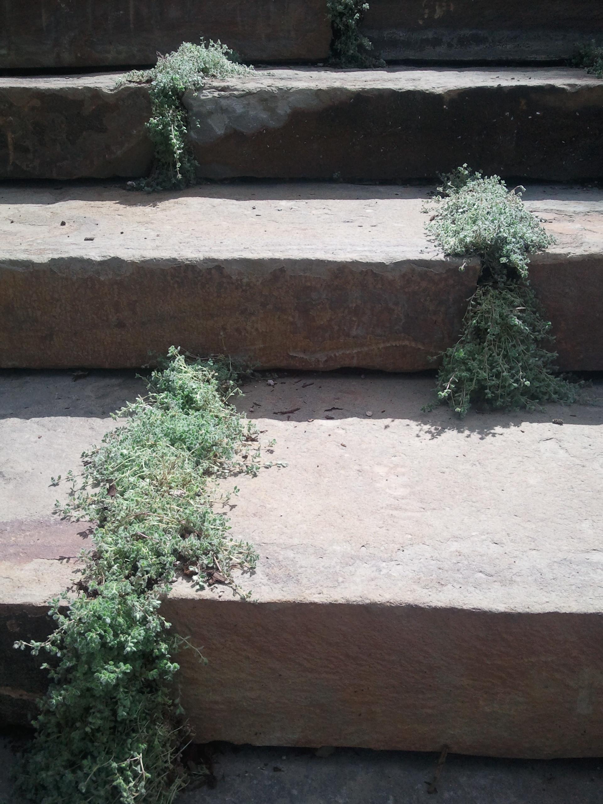 steps2.jpg
