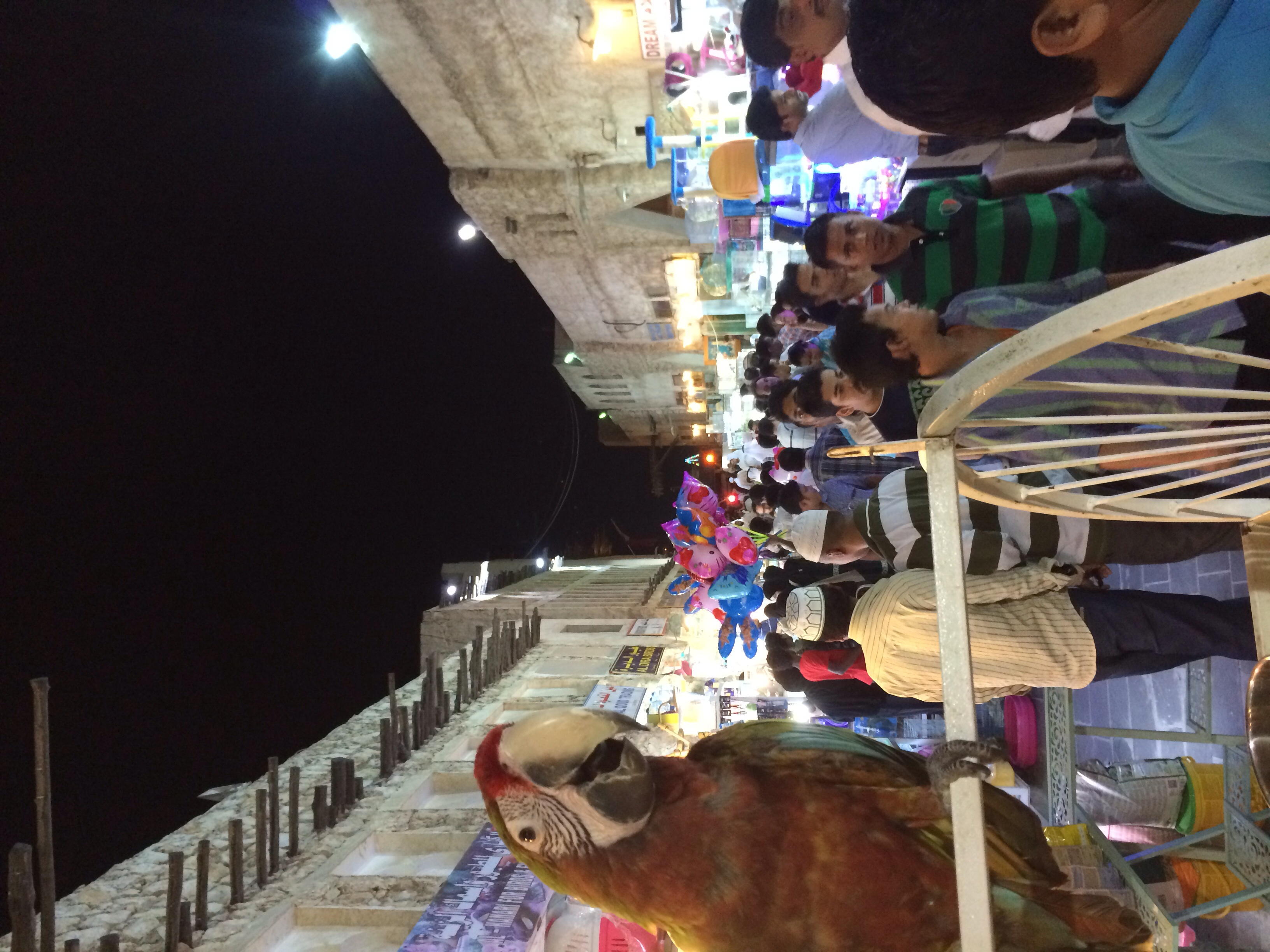 Hanging with the big birds in Souq Waqif market after sunset