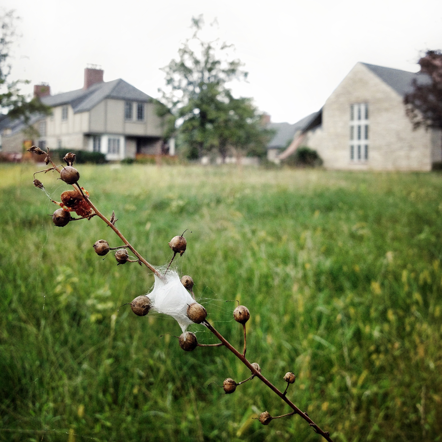 spillman farmer architects_bryn athyn college_cottages_5561 square_1500.jpg