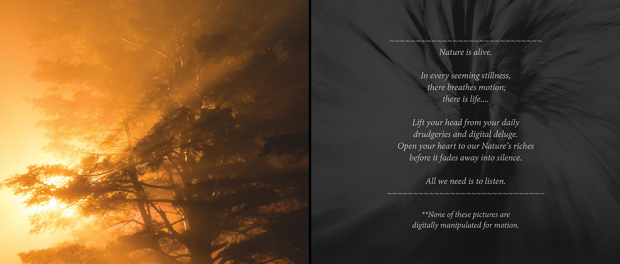 Carlin - Tree Whispers v2012_Page_23-24.jpg