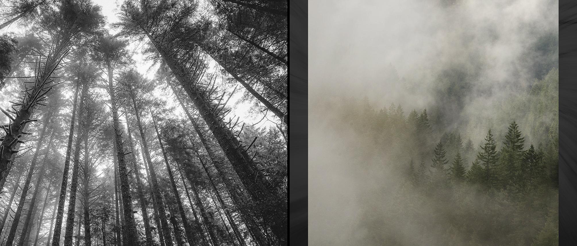 Carlin - Tree Whispers v2012_Page_19-20.jpg