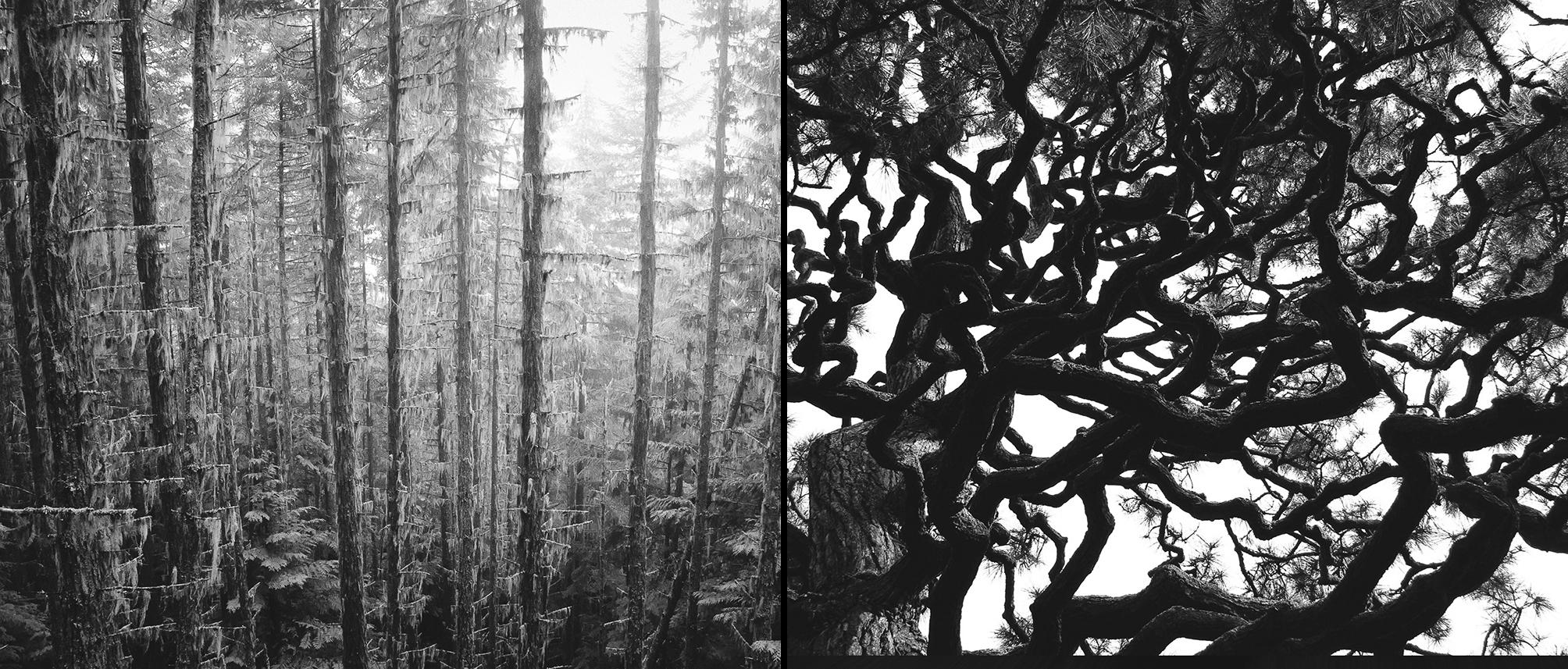 Carlin - Tree Whispers v2012_Page_21-22.jpg