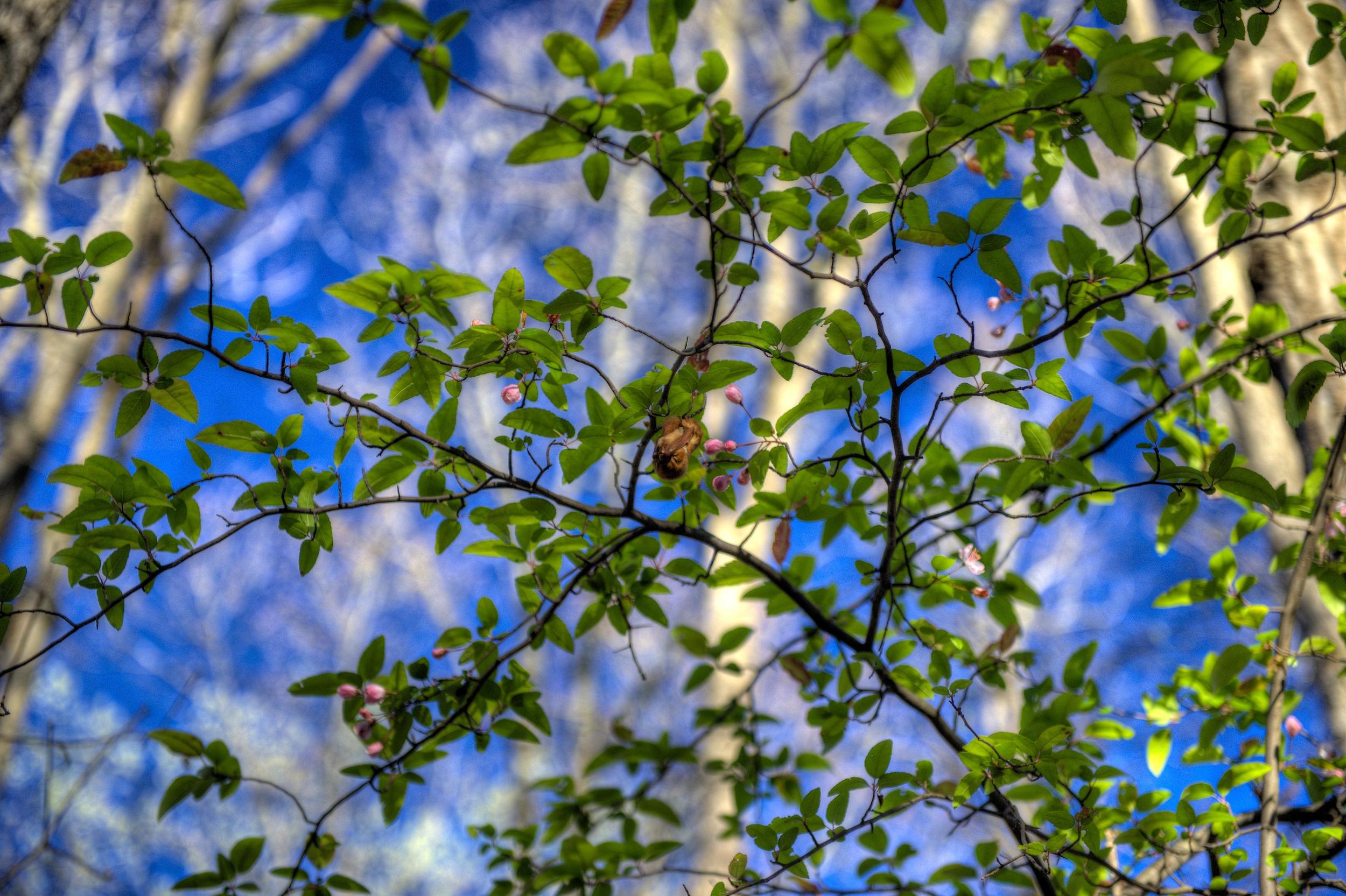 A bat in a tree
