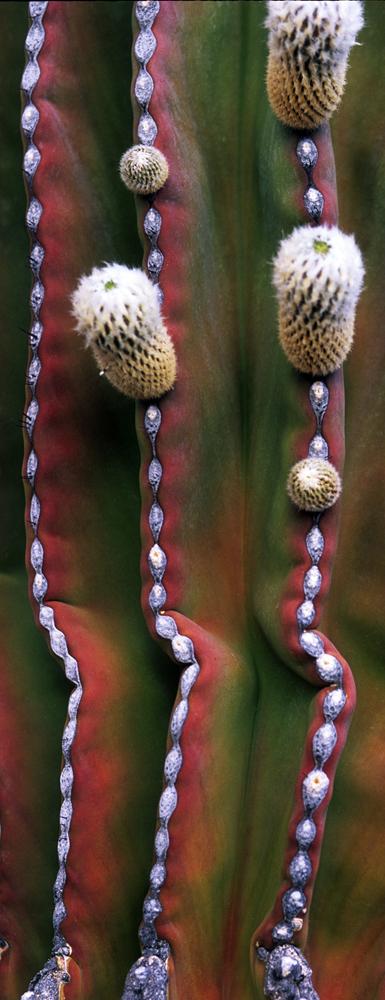 Cactus Beads, Baja