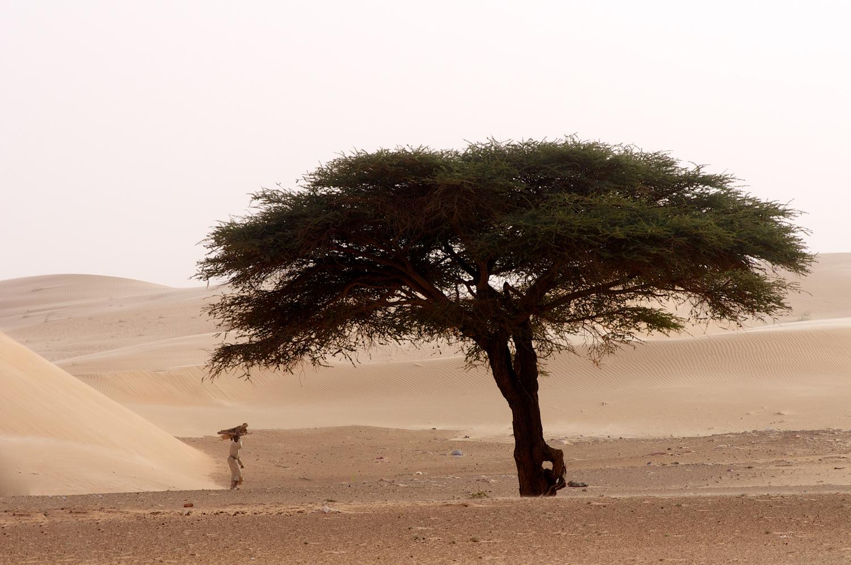 AE_Mauritania_0582.jpg