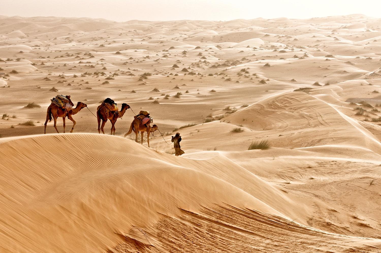 Camel Herder. Sahara Desert, Mauritania