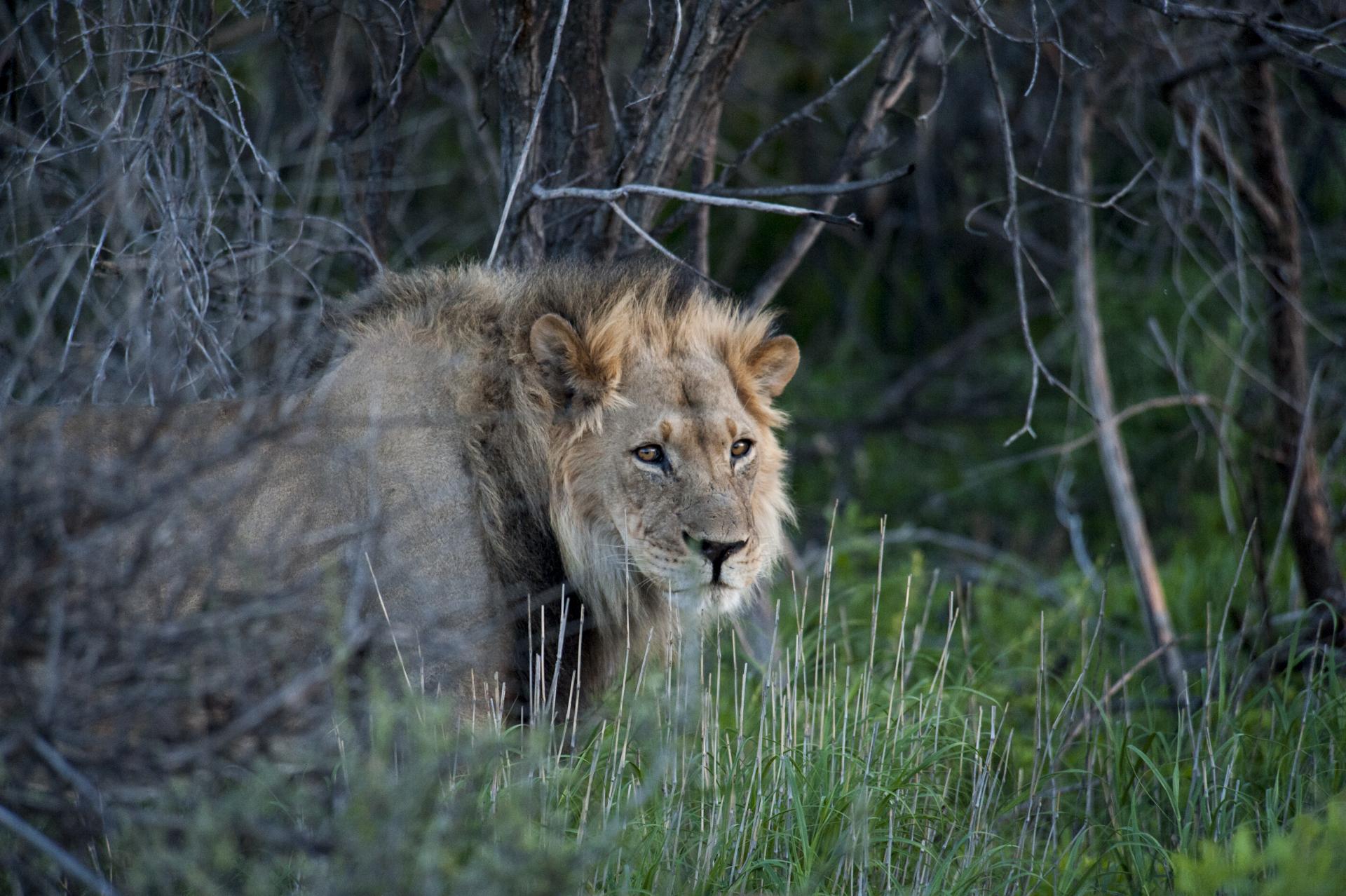 AE_Botswana_1213_4334.jpg