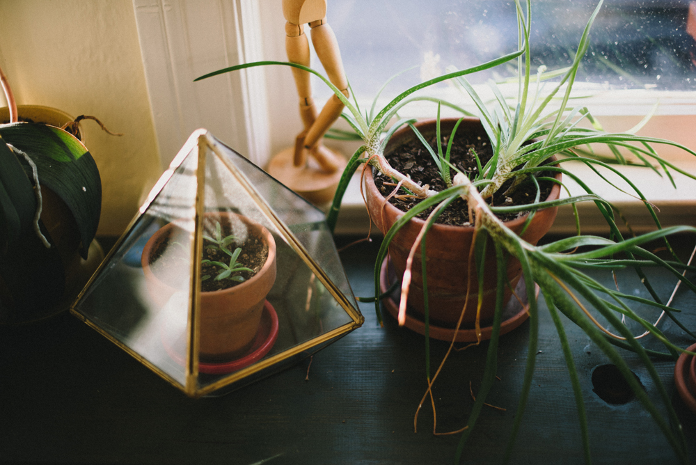 Plant vignette  | The Honest Home | Jared Tharp | Loveridge Photography