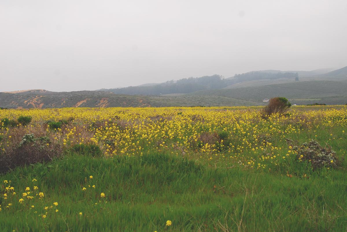Montana de Oro Field