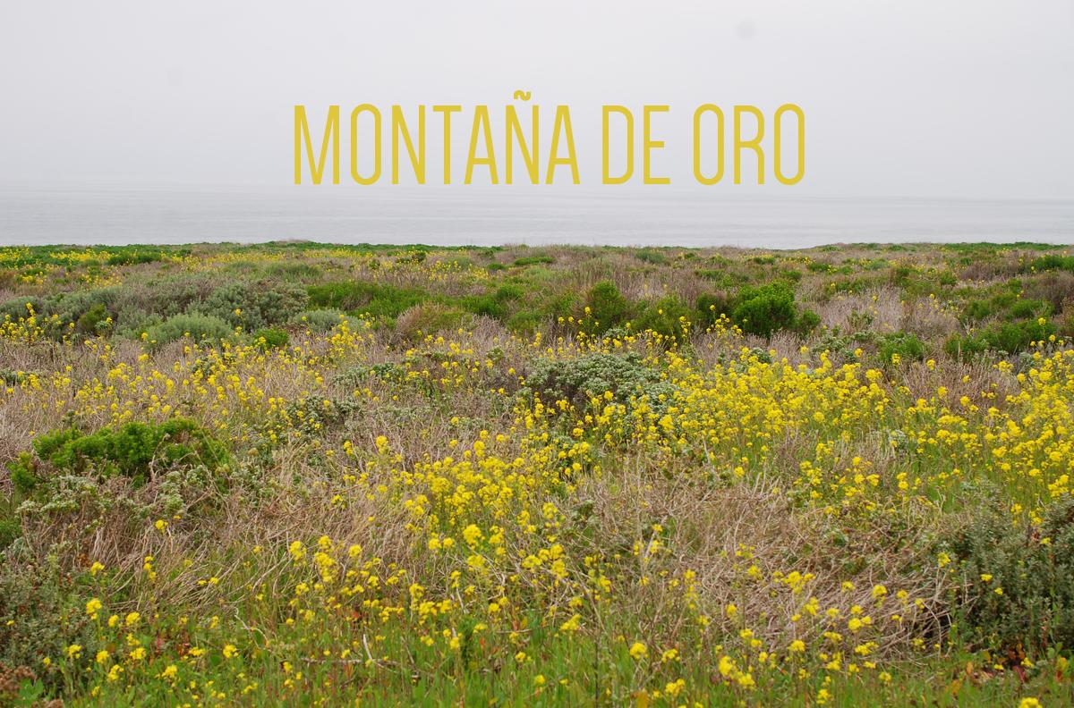 MONTAÑA DE ORO | THE HONEST HOME