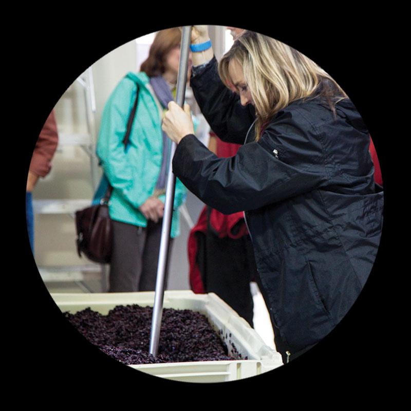 Wine-Crush-Seattle-Winery-Tour.jpg
