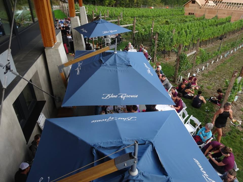 blue grouse winery top view.jpg