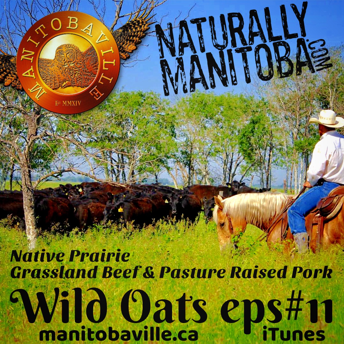 manitobaville podcast naturally manitoba native prairie grassland beef and pasture raised pork wild oats podcast episode #11.JPG