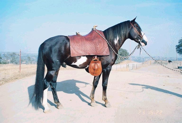 Rancho del Sueno - Spanish Colonial Horses