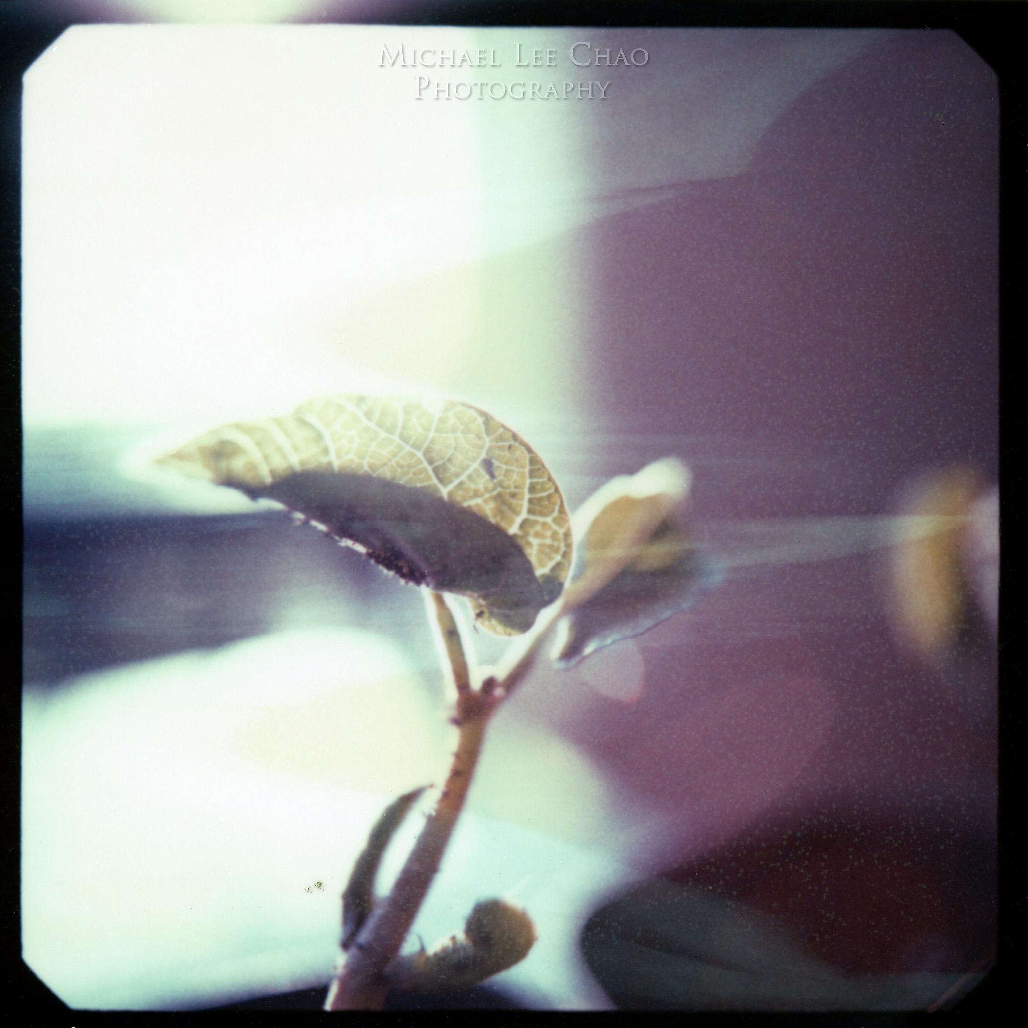 Polaroid-005.jpg